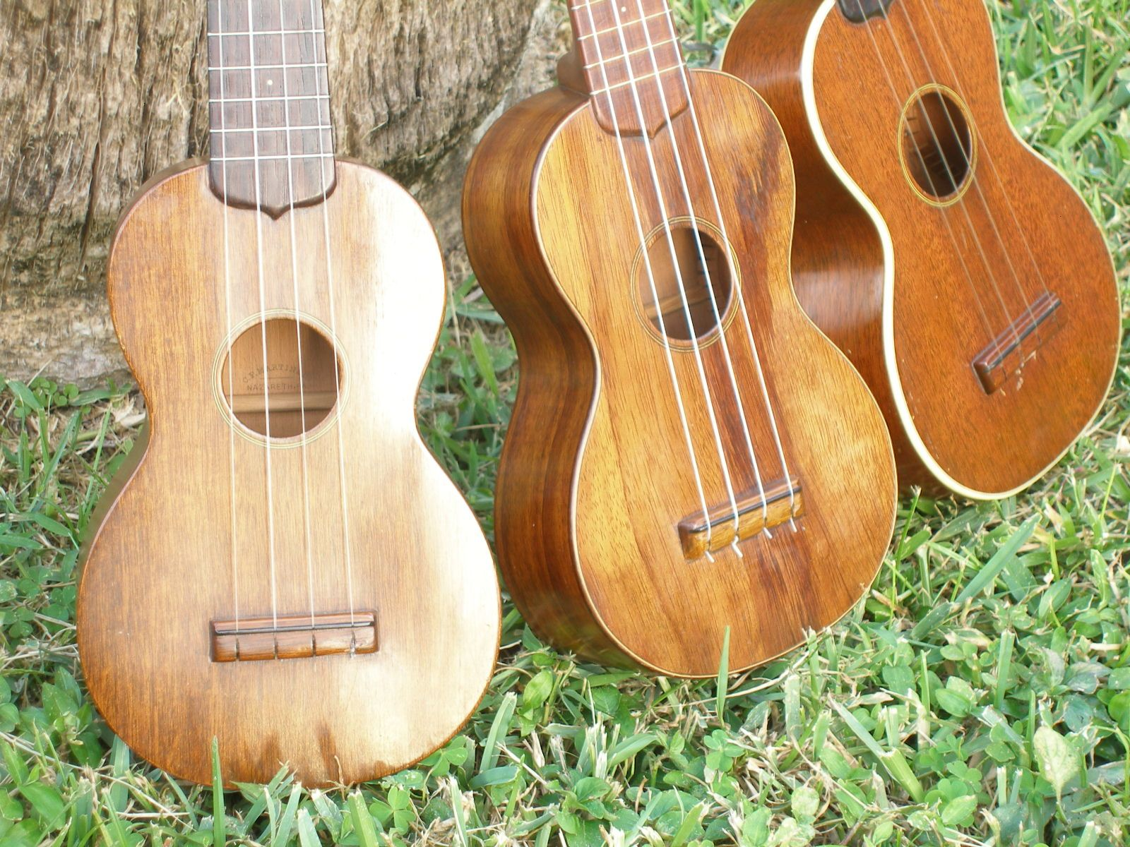 Different Ukulele Wood Types